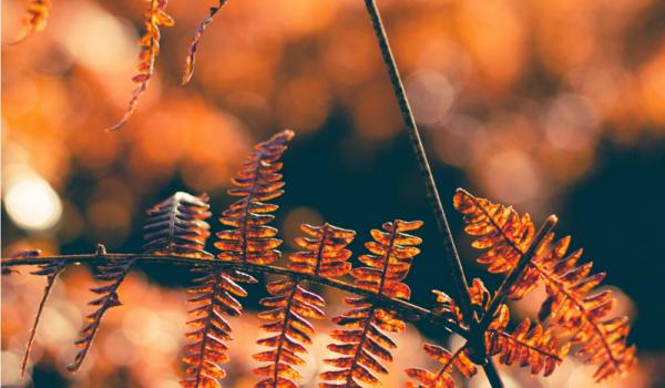 15 claves para ayudarte a encontrar tu paz interior